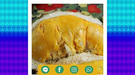 Durian Kupas Stock gambar direktori gambar durian animasi di rebanas rebanas