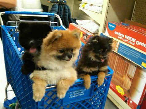 does lowes allow dogs should i take my shopping pet stroller