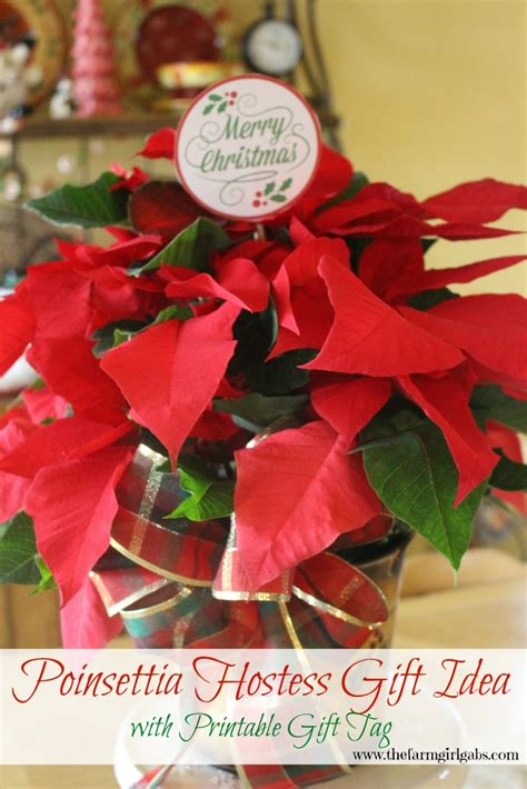 poinsettia care and hostess gift idea www