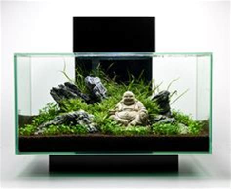 fluval chi aquascape 1000 images about fluval chi aquascape ideas on pinterest