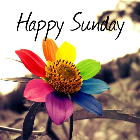 imagenes good morning happy sunday happy sunday quotes and sayings word quote famous quotes