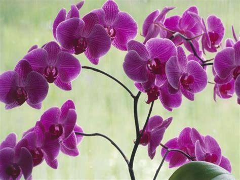 imagenes hermosas de orquideas flores bonitas orqu 237 deas im 225 genes y fotos