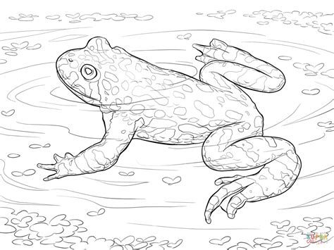 coloring pages frogs and toads oriental fire bellied toad coloring page free printable