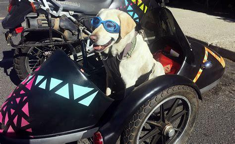Dogs Motto as copilot motorcycle road trip to alaska