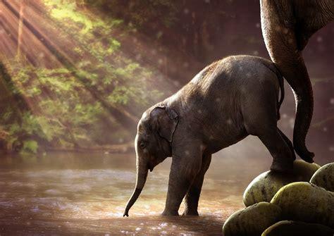 apply  funding elephant family