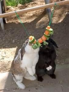 kletterspielzeug garten 220 ber 1 000 ideen zu kaninchen spielzeug auf