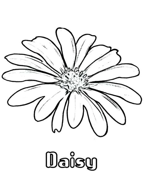 free coloring pages daisy flower daisy flower coloring page for kids daisy flower coloring