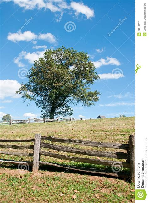 design elements lone tree lone tree royalty free stock photography image 24218657