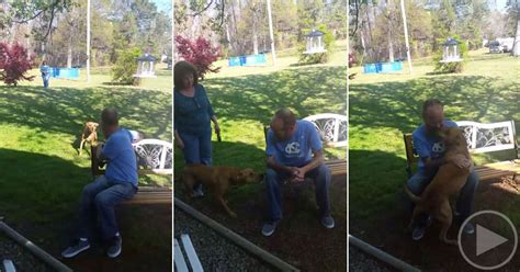 doesn t recognize owner doesn t recognize owner after losing 50 lbs until he sniffs him 171 twistedsifter