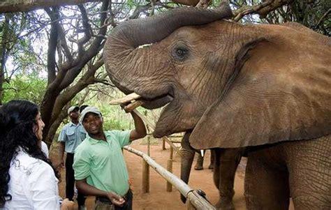 Ulysses Tours & Safaris | The Elephant Sanctuary
