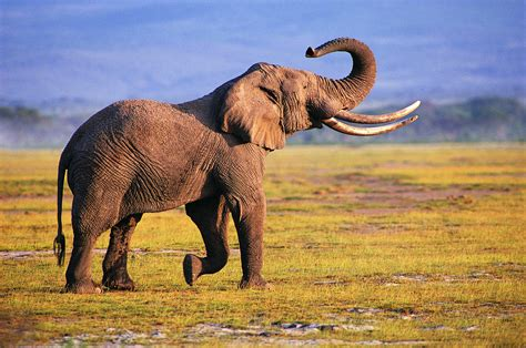 elephants animal blawg