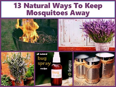 Eliminate Mosquitoes In Backyard by How To Get Rid Of Mosquitoes In Backyard Outdoor Goods