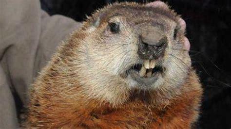 groundhog day s big show malverne mel and holtsville hal predict more winter on
