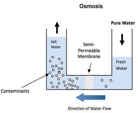 osmosis diagram osmosis