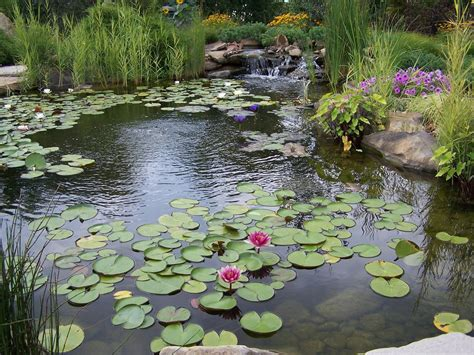 backyard water garden image gallery watergarden