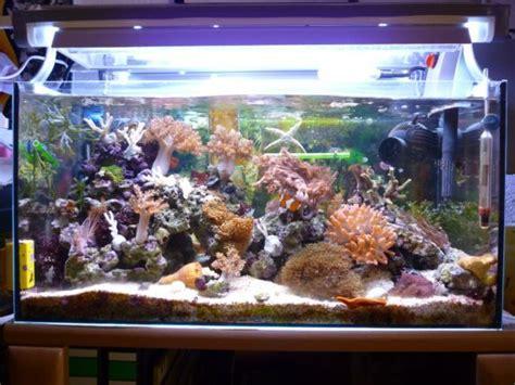 120 liter meerwasseraquarium mein 54 liter nano riff aquarium forum