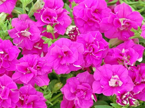 images of flowers bright beautiful flowers for a colorful garden hgtv