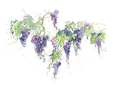 watercolor vine tattoos wine grape vines grape vines wines