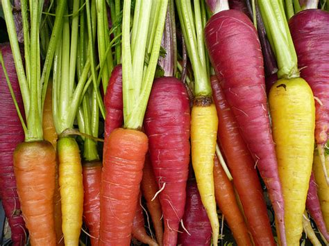 colorful carrots colorful carrots flickr photo