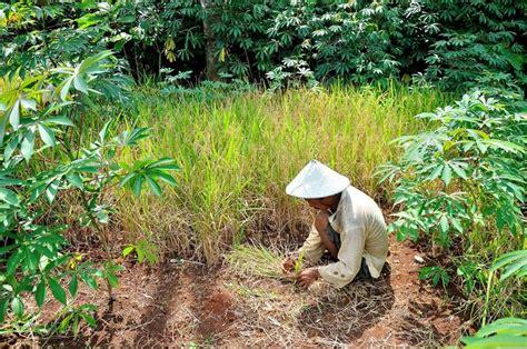 Feed Indonesia feeding indonesia inside indonesia