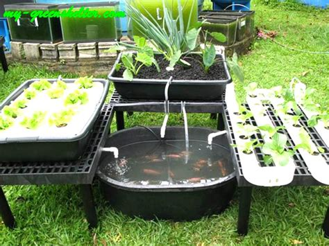 aquaponic backyard backyard aquaponics designs outdoor furniture design and