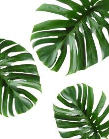 Colors For Bathroom Walls - best 25 tropical leaves ideas on pinterest tropical background palm and tropical pattern