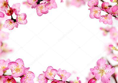 cornice di fiori cornice di fiori di pesco foto stock 169 annakhomulo 40418007