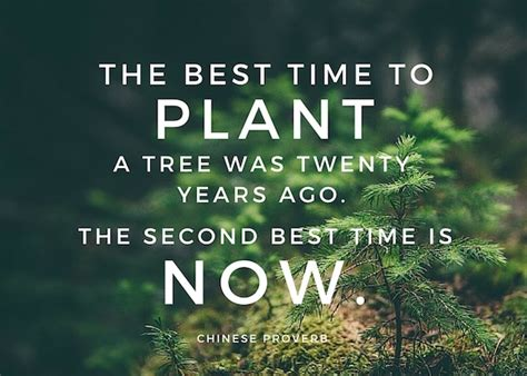 best time to plant today is the best time to plant your influence tree