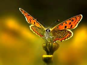 mariposas pics fondos de mariposa fondos de pantalla de mariposa