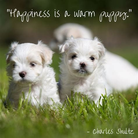 happiness is puppies 17 best images about quotes on true quotes about doggies and