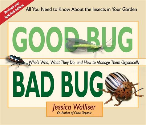 are bed bugs harmful good bug bad bug gardenbunch