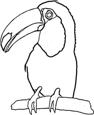 toucan on the tree coloring page supercoloring com