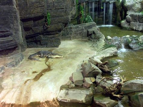 aquarium de la porte dor 233 e photo fosse aux crocodiles