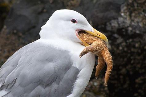 can seagulls eat bread bird digestion how birds eat
