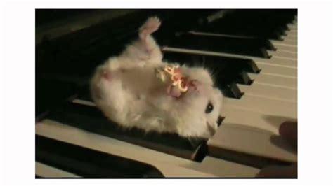 hamster   piano explodingmp youtube