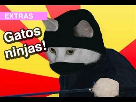 imagenes animales extraños gatos ninjas l wdf extra