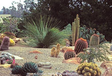 Cactus Rock Garden Rock And Cactus Garden Ideas Photograph Style Garden With
