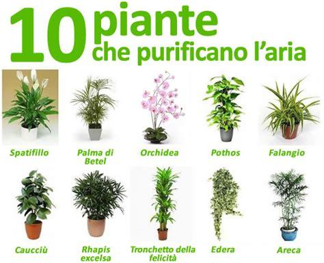 piante da interno purificano l piante da appartamento ideare casa