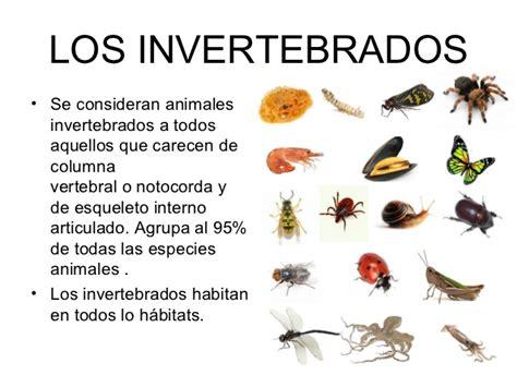 imagenes animales invertebrados trabajo invertebrados