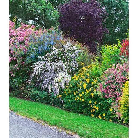 pflegeleichte pflanzen für den vorgarten die 25 besten ideen zu heckenpflanzen auf