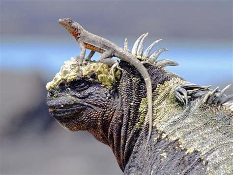 7 Amazing Animals From The Galapagos Islands by Galapagos Islands Vacation Gives Glimpse Of Amazing