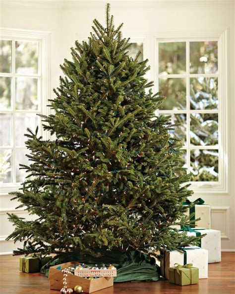 piper mountain christmas tree farm for sale 25 best ideas about trees for sale on tree sale fresh cut