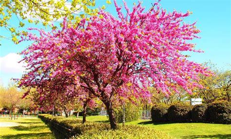 imagenes de flores y arboles top 10 225 rboles con flores parques alegres i a p
