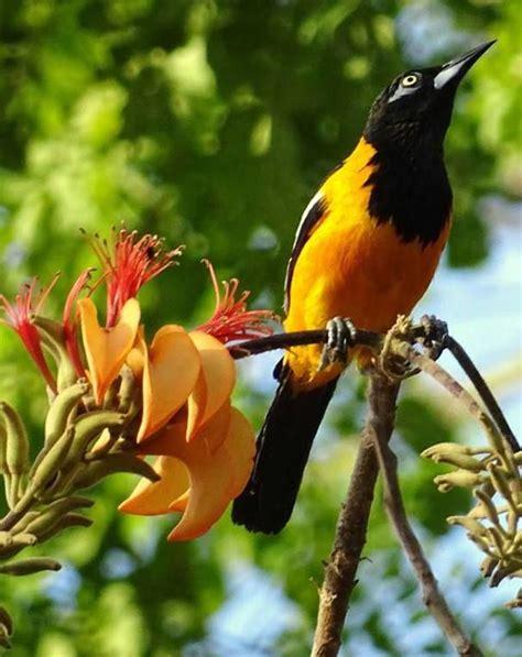 imagenes de venezuela flora y fauna 17 best images about flora y fauna venezolana on pinterest
