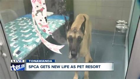 creature comforts pet resort old spca given new leash on life as creature comforts