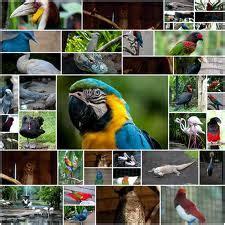 Tiket Bali Bird Park Dewasa bali bird park tiket masuk promo terbaru