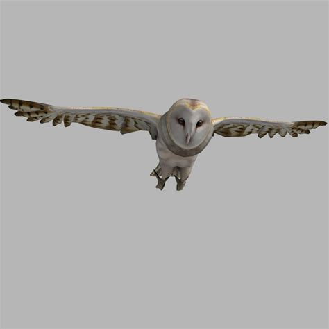 Barn Owl Hoot 3ds Max Barn Owl Rigged