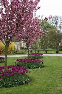 best flowering tree for front yard how pretty use rising sun redbud and layer bermuda
