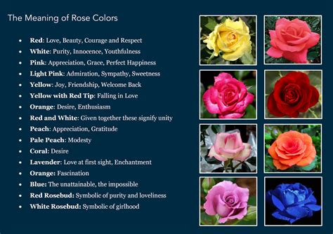 the meaning of colors awesome quotes the meaning behind a flower s color