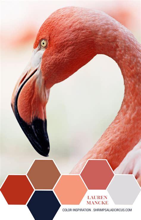 how do flamingos get their pink color mancke s pink flamingo color inspiration shrimp